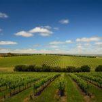 Retreats Australia SA - Wine and business