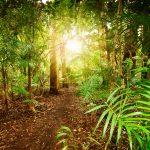 7 Retreats Newly Listed